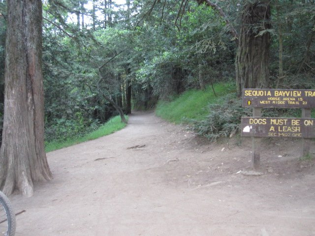 Where I start most of my trail runs in Joaquin Miller/Redwood Park, Oakland
